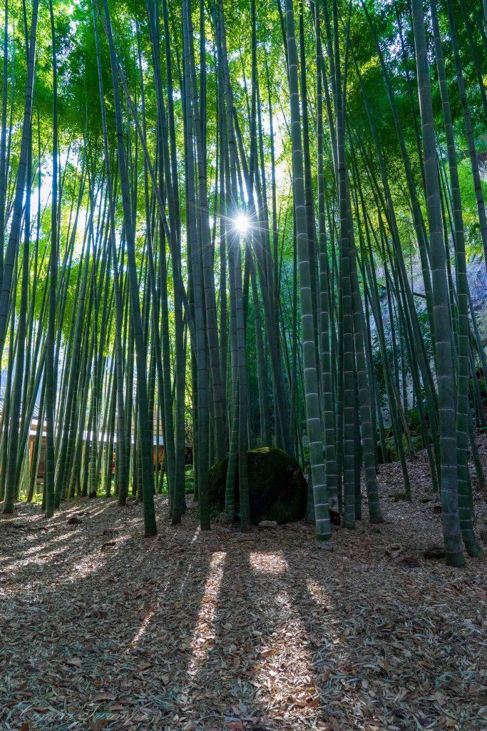 報国寺「竹の寺」