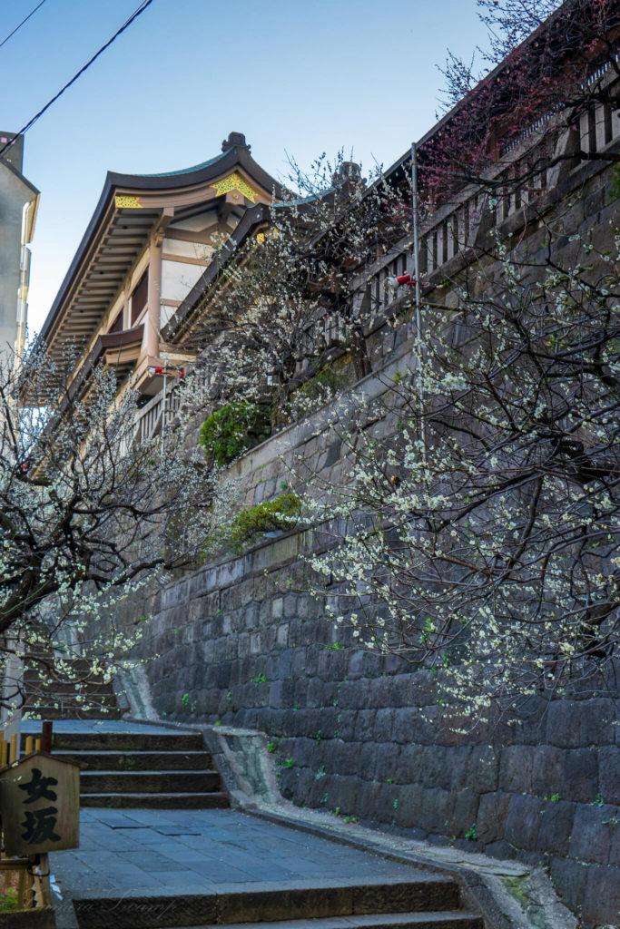 湯島天神(湯島天満宮)女坂の階段の下 梅